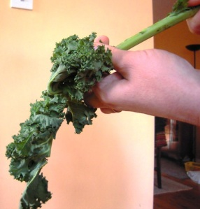 Removing the leaves from curly kale